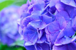 beautiful bloom blooming