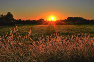 beautiful cropland dawn